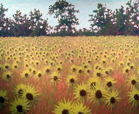 FIELDS OF SUNFLOWERS - click to view larger image...